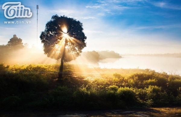 Nắng mai chiếu qua tán cây